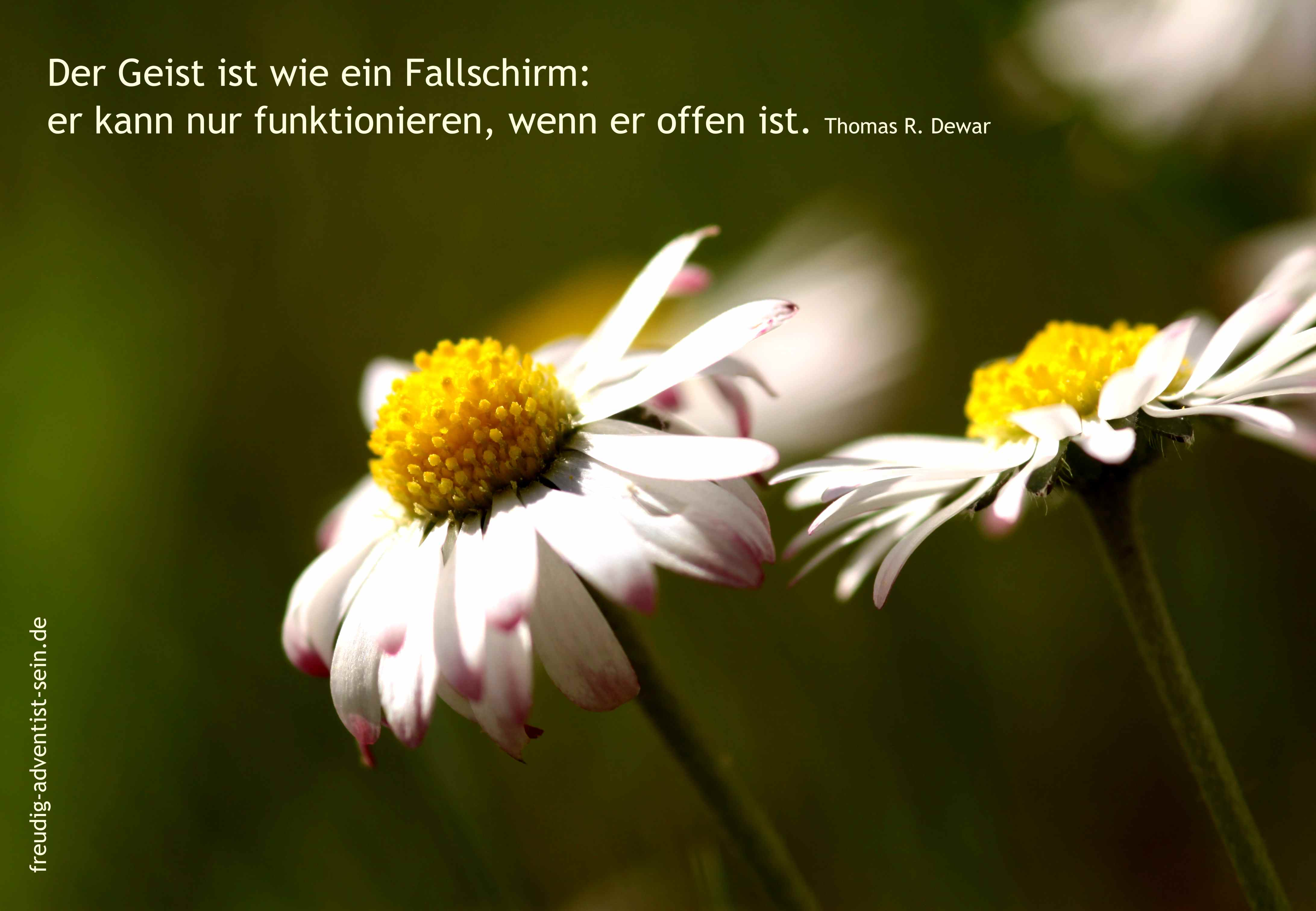 freudig-adventist-sein-15-09-small